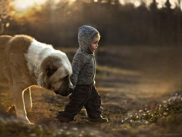 40 Ideas of Cool Photography with Dogs 31