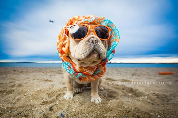 40 Ideas of Cool Photography with Dogs 33