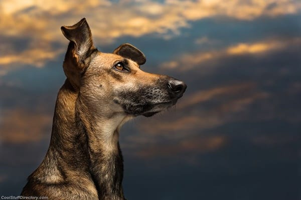 40 Ideas of Cool Photography with Dogs 36
