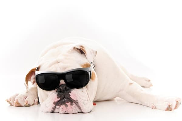 40 Ideas of Cool Photography with Dogs 5