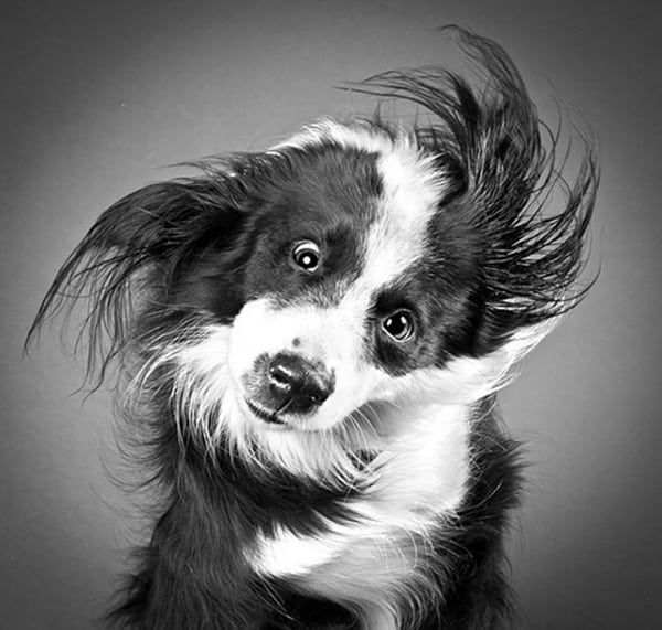 40 Ideas of Cool Photography with Dogs 6