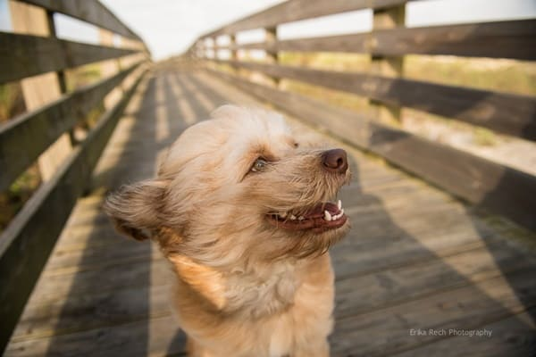 40 Ideas of Cool Photography with Dogs 9