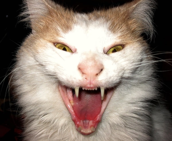 40 Scary and Funny Cat Pictures 1