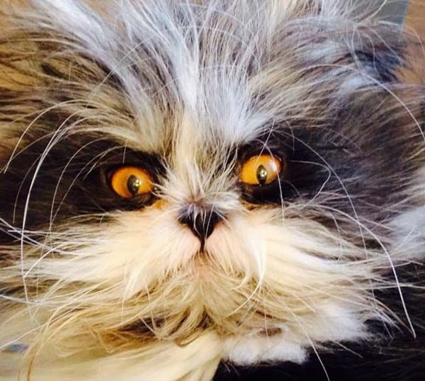 40 Scary and Funny Cat Pictures 13