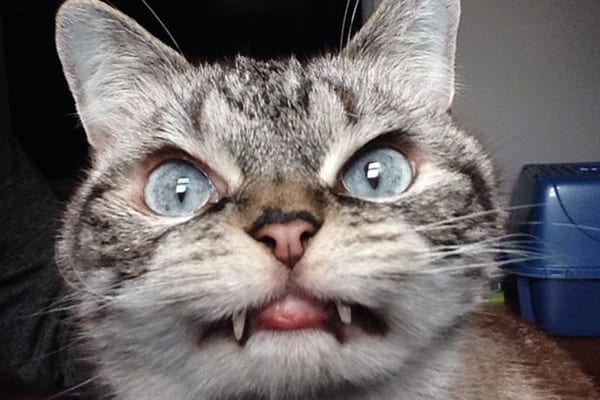 40 Scary and Funny Cat Pictures 8