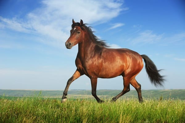 Causes of Sudden Death in Horses 2