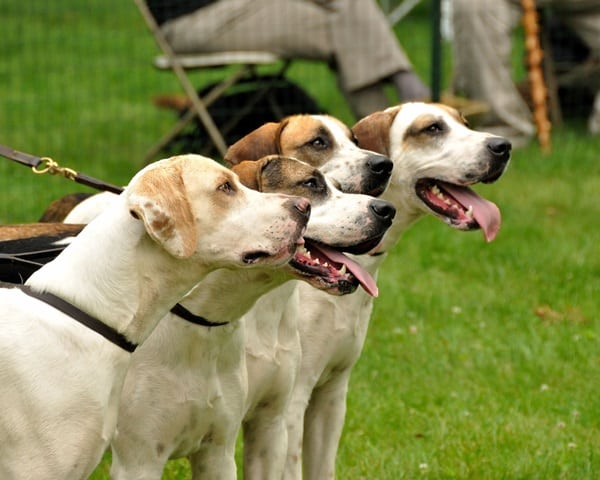 10 Most Healthiest Dog Breeds In The World Tail And Fur