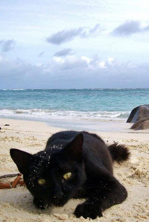 animals enjoying beach (14)