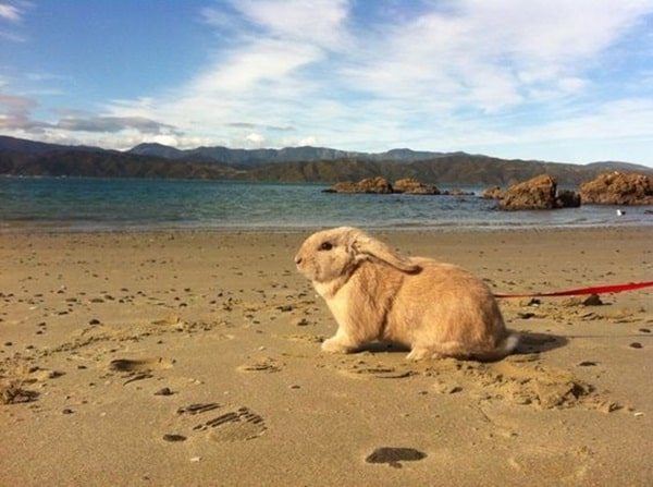 animals enjoying beach (17)