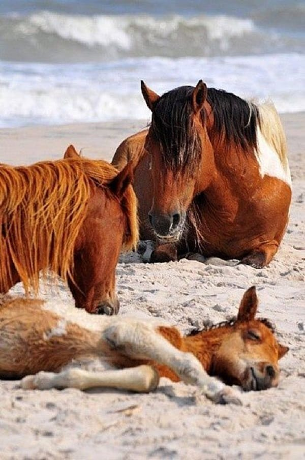 animals enjoying beach (23)