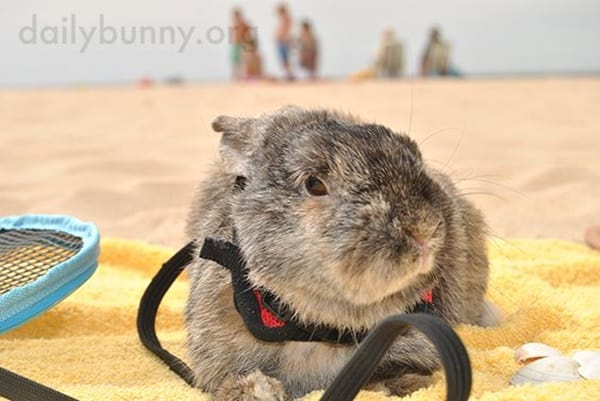 animals enjoying beach (28)