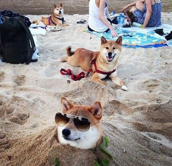 animals enjoying beach (29)