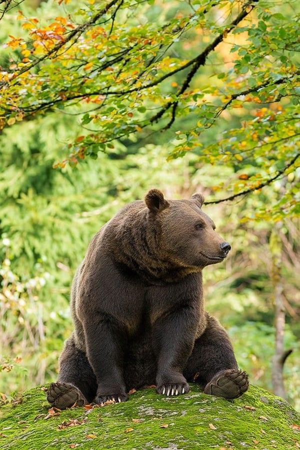 Beautiful black honey gives nuru massage to a lucky whitelostdogscene432443 - 3 1