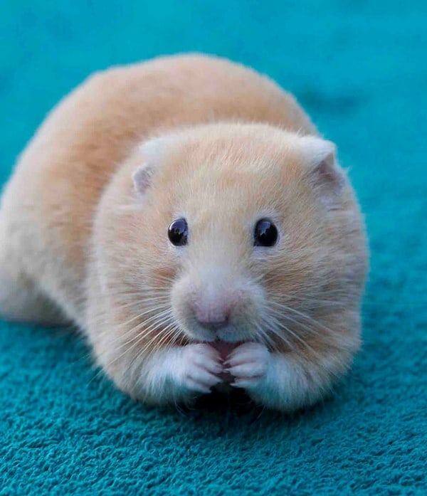 Things your Hamster wants you to know (3)