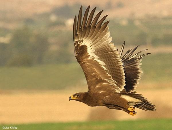 10 Fastest Birds in the World 3
