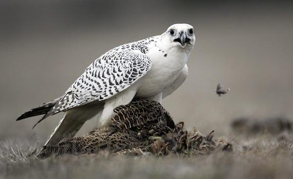 10 Fastest Birds in the World 4