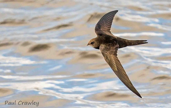 10 Fastest Birds in the World 5