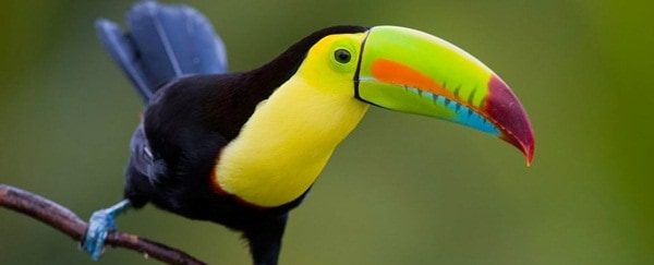15 Birds with Unbelievable Longest Beaks 6