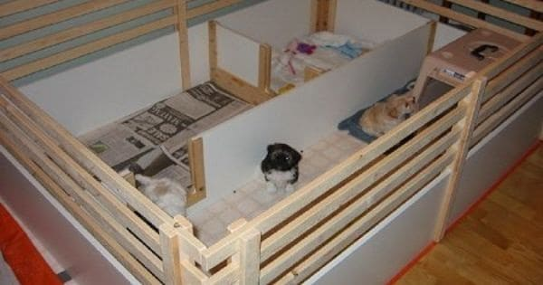20 Comfy and Classy Whelping Box Ideas 7