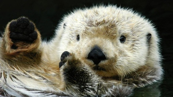 40 Cute Otter Pictures 18