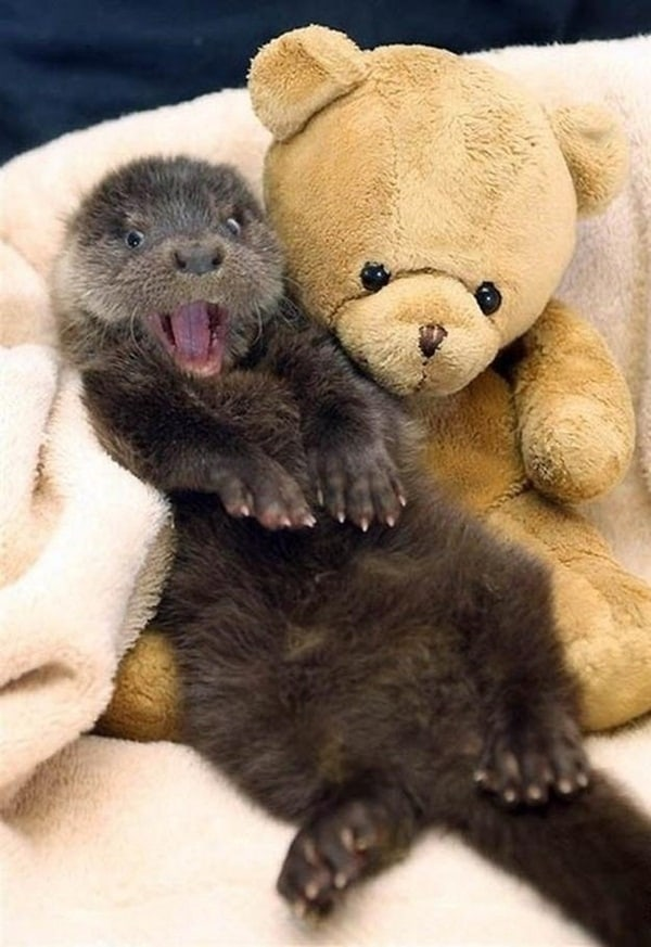 40 Cute Otter Pictures 39