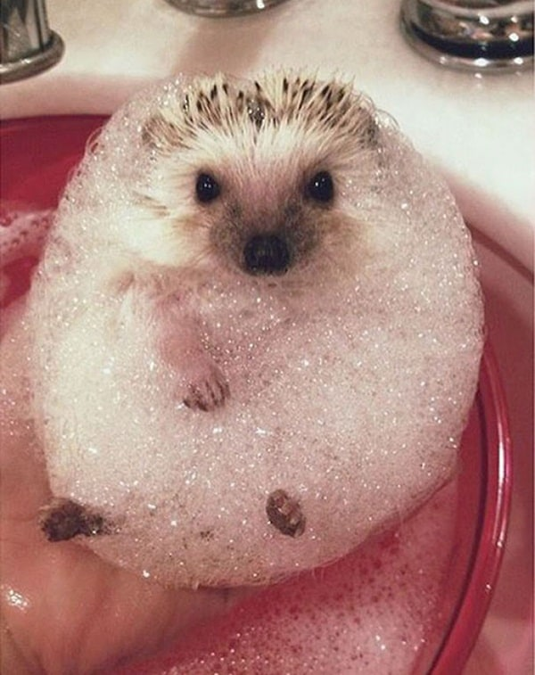 40 Cute and Funny Animal faces Before Bath 11