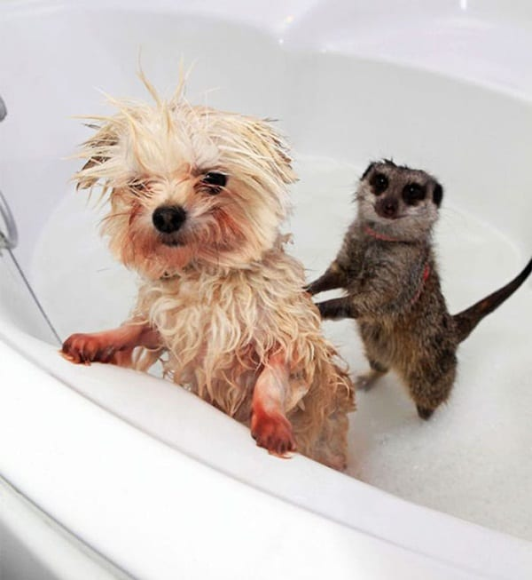 40 Cute and Funny Animal faces Before Bath 13