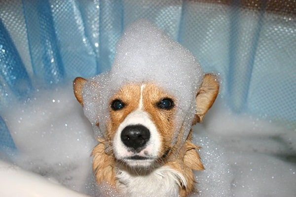 40 Cute and Funny Animal faces Before Bath 3
