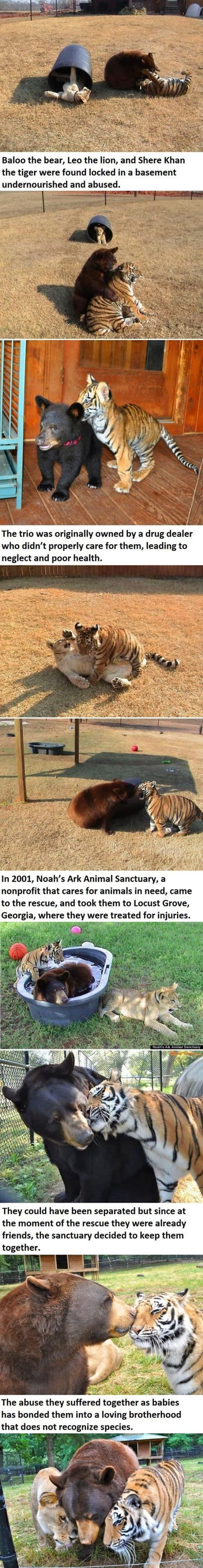10 Heart Touching Animals Stories 4