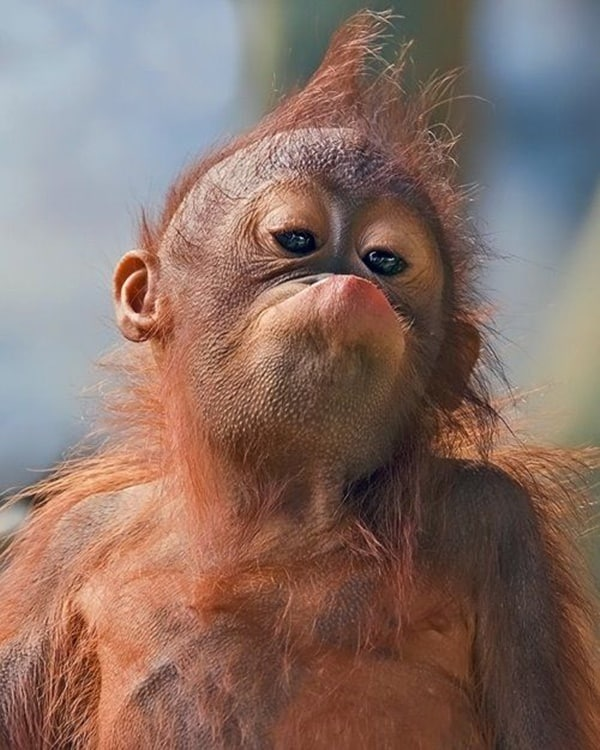 40 Animal Pictures with Pout Face 3