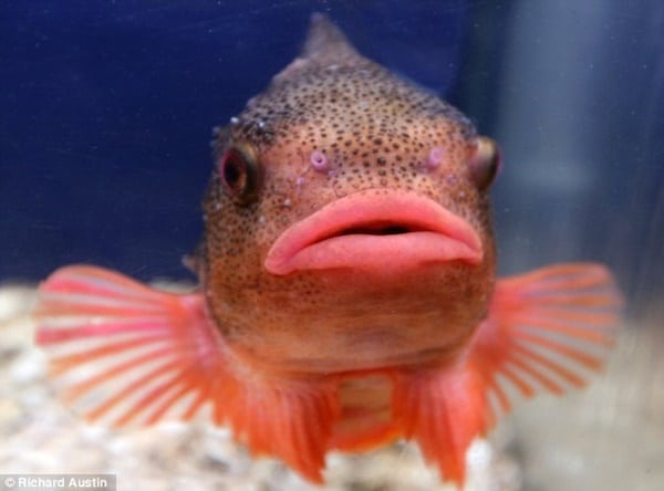 40 Animal Pictures with Pout Face 38