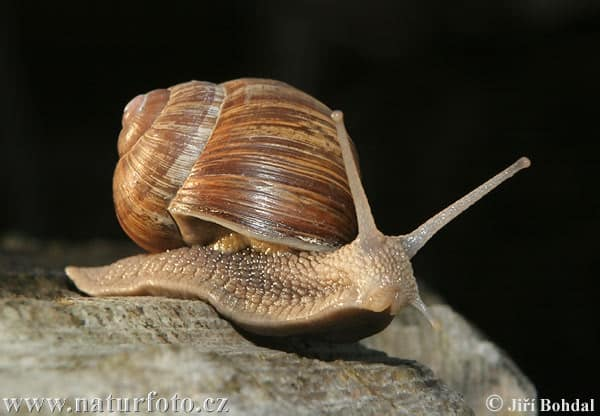40 Pictures of Snails and Slugs 10