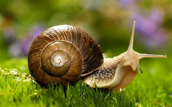 40 Pictures of Snails and Slugs 12