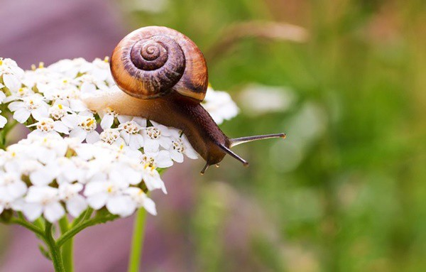 40 Pictures of Snails and Slugs 13