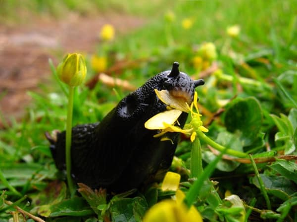 40 Pictures of Snails and Slugs 17