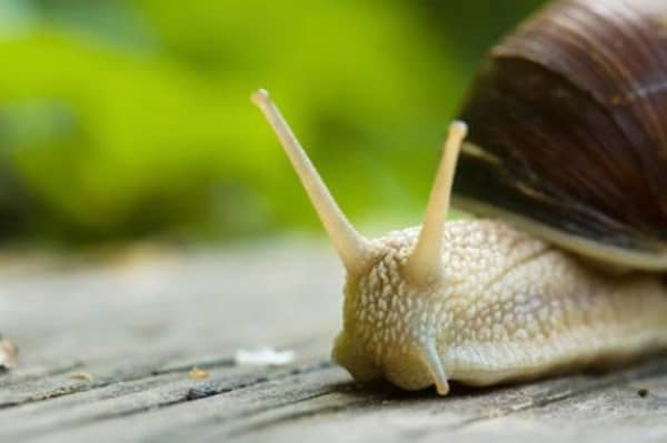 40 Pictures of Snails and Slugs 22