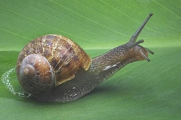 40 Pictures of Snails and Slugs 23