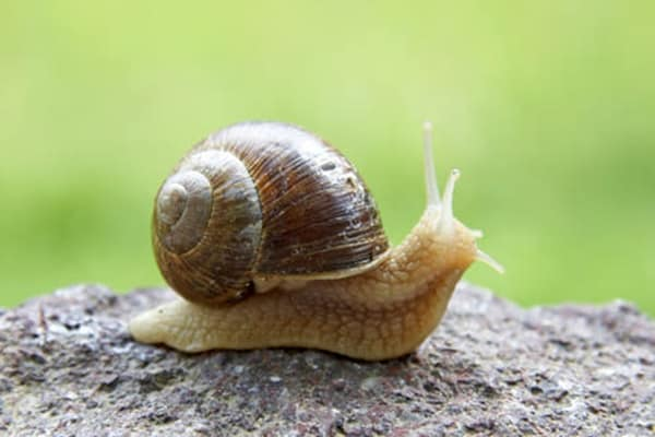 40 Pictures of Snails and Slugs 3