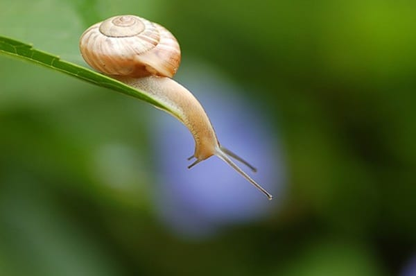 40 Pictures of Snails and Slugs 31
