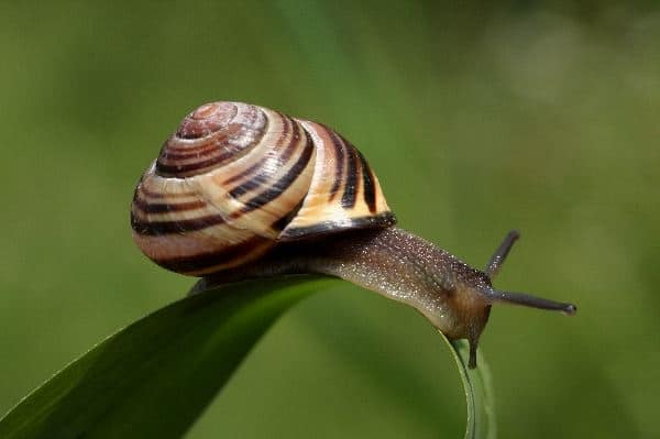 40 Pictures of Snails and Slugs 32