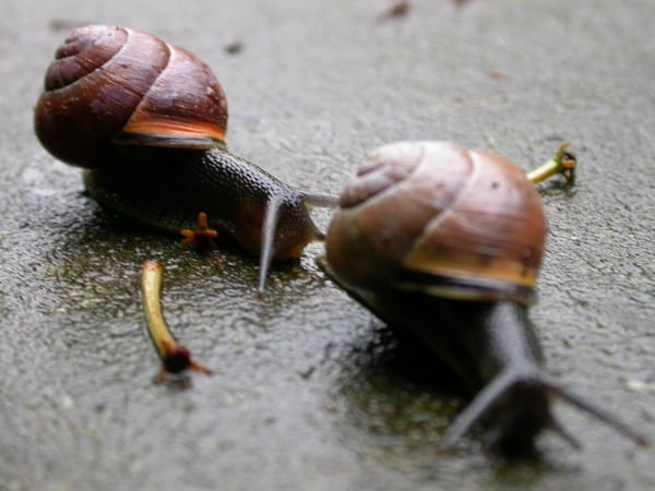 40 Pictures of Snails and Slugs 35