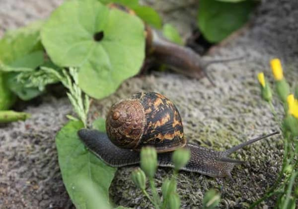 40 Pictures of Snails and Slugs 36