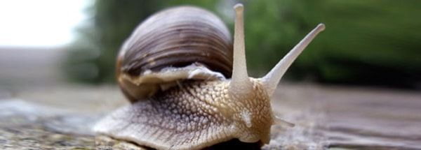 40 Pictures of Snails and Slugs 4