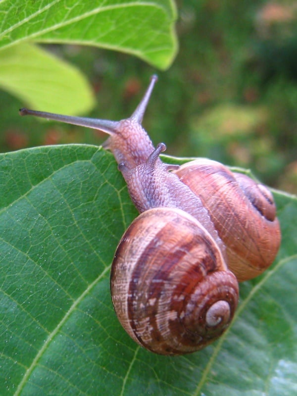 40 Pictures of Snails and Slugs 8