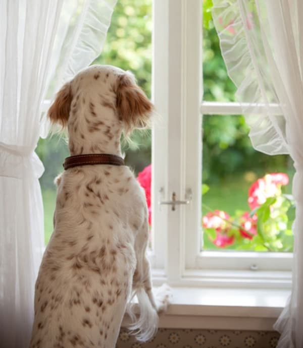 How to Stop Dog Barking in your Apartment 3