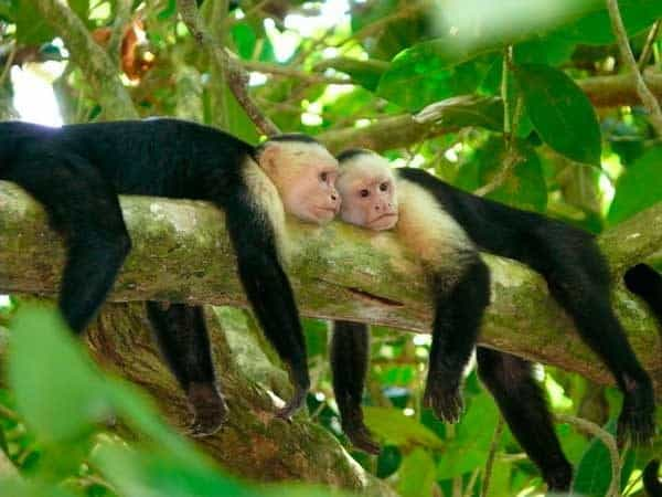 10 Popular Species of Monkeys to Increase your General Knowledge 10