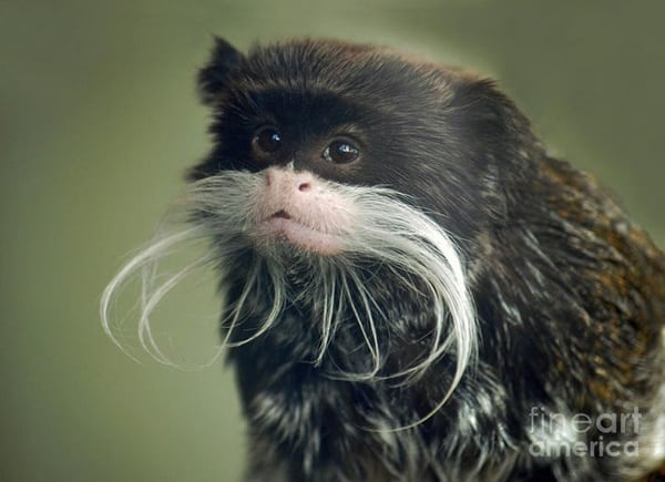 10 Popular Species of Monkeys to Increase your General Knowledge 2
