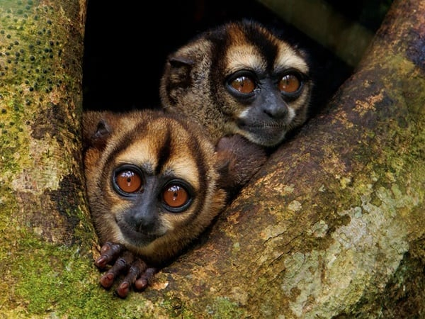 10 Popular Species of Monkeys to Increase your General Knowledge 3