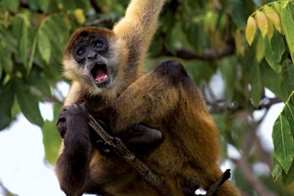 10 Popular Species of Monkeys to Increase your General Knowledge 4