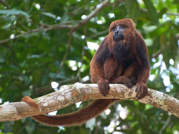 10 Popular Species of Monkeys to Increase your General Knowledge 6